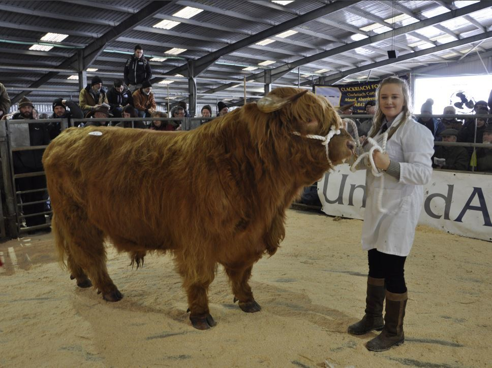 Kerrie MacGillivray, 16, of Pennygown Farm, Aros, Mull, with Seumas Buidhe of Eilean Mor, which won the Best Aged Bull.