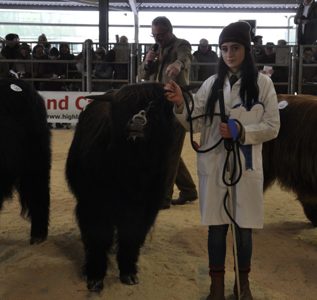 Chloe Roberts with the second Best Yearling Bull, bred by Arthur Hill and owned by Mr and Mrs Simon Haley.