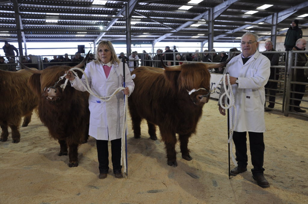 Catherine McKechnie and Lisa 2nd of Gartocharn, which came second in the Best Three Year Old Heifer, and Richard Thomson with Catriona 4th of Gartocharn, also belonging to Mr and Mrs J S McKechnie of Gartocharn, Dumbartonshire, which came first.