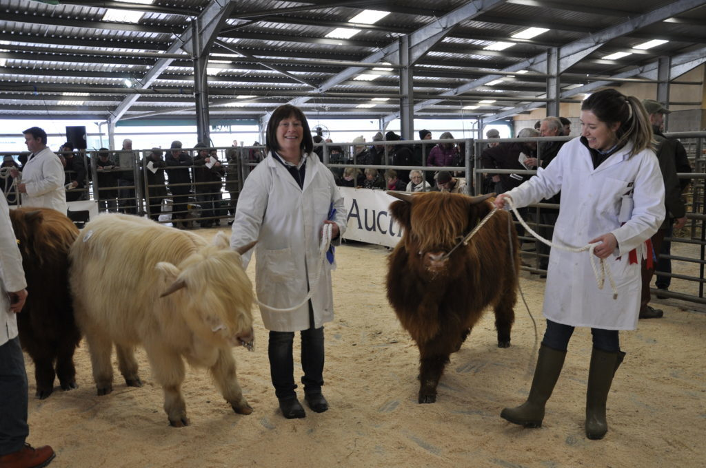 Left to right, Hilary Crane of Leadburn, Peeblesshire, owner of Pearl of Gray Brae which took second in the Best Yearling Heifer, and Kay Aitchison of Mossdale Farm, also near West Linton, with Kathleen Ruadh 2nd of Mosscairn, which came first.