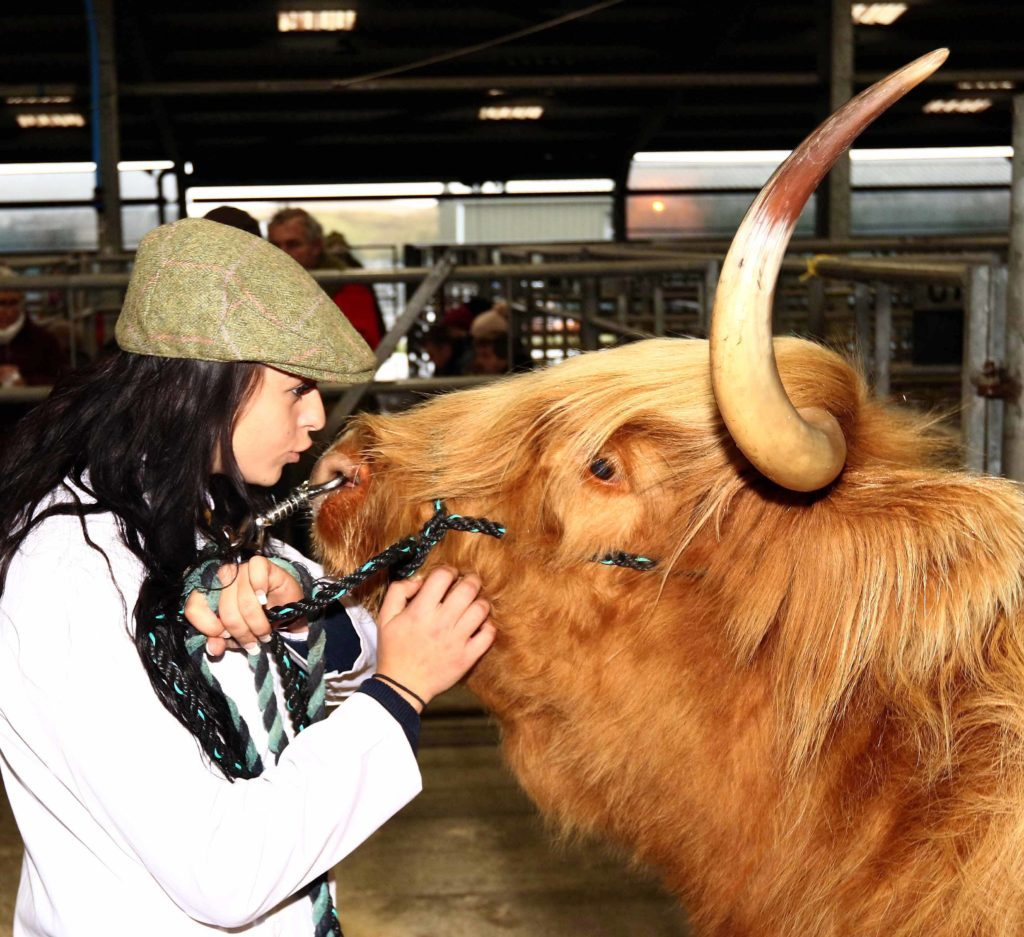 Chloe Roberts calms down Seonag 3rd of Bien Esk   before the show at Oban livestock centre. Picture by Kevin McGlynn.