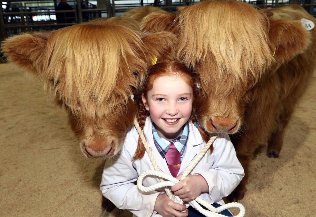 Kate Cameron with  Catriona Ciar 2nd of Dunach and Sith Ruadh 2nd of Dunach who retained the title of best pair of suckled calves. Picture by Kevin McGlynn.