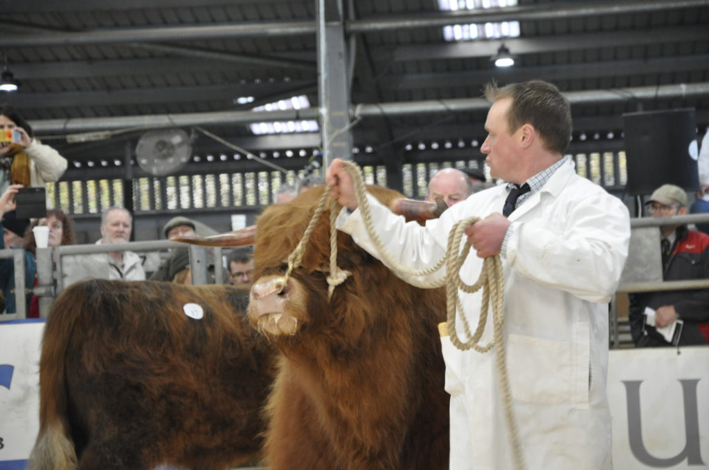 One of the Highland Cattle Society's  14 classes in Sunday's spring show.