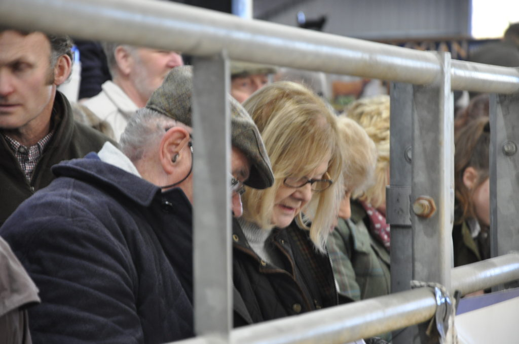 Keeping an eye on the Highland Cattle Society's 128th Spring show catalogue.