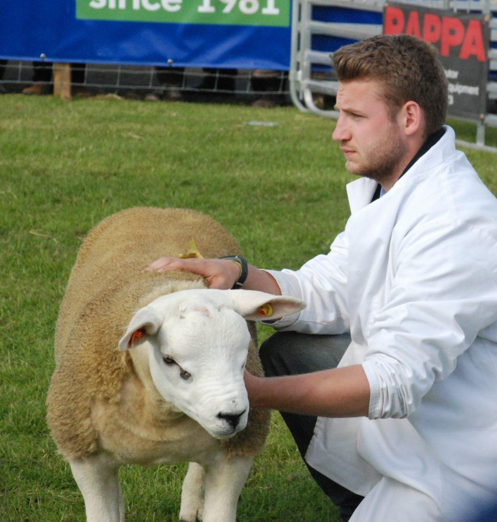 Ewan Campbell from Lochgoilhead with Texel sheep from the Corrow flock. 06_a26RHS04_CampbellTexel
