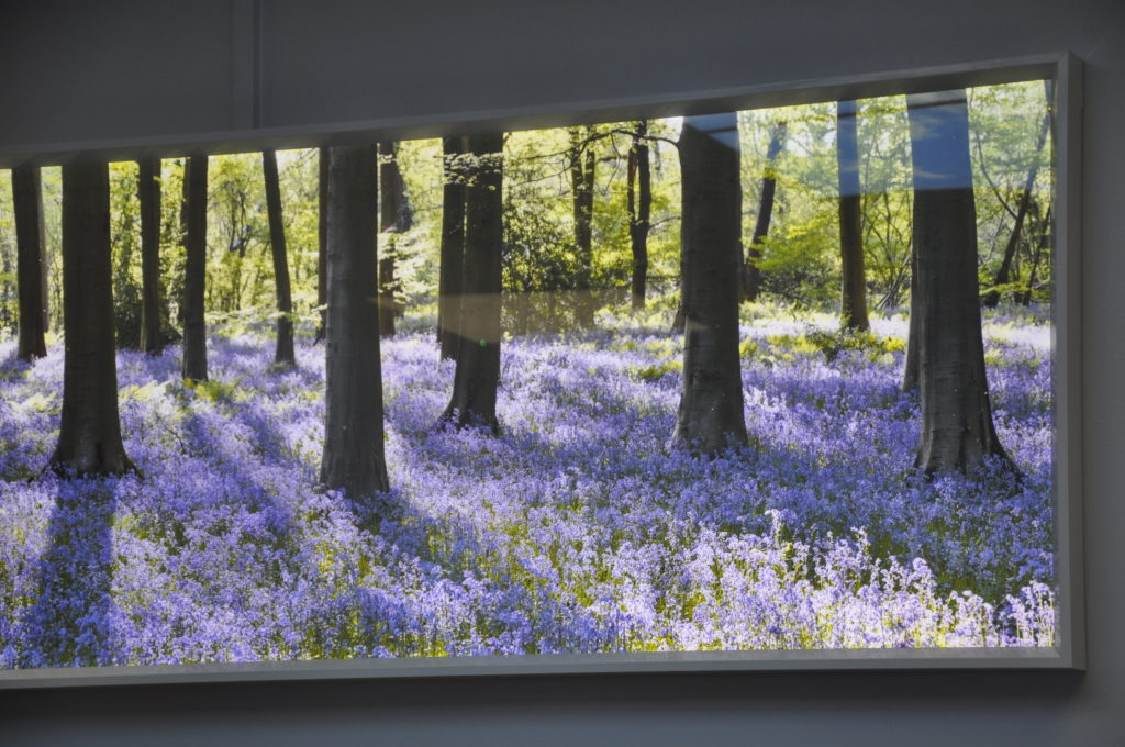 A bluebell scene to help calm patients is one of the special design features in the scanner room.