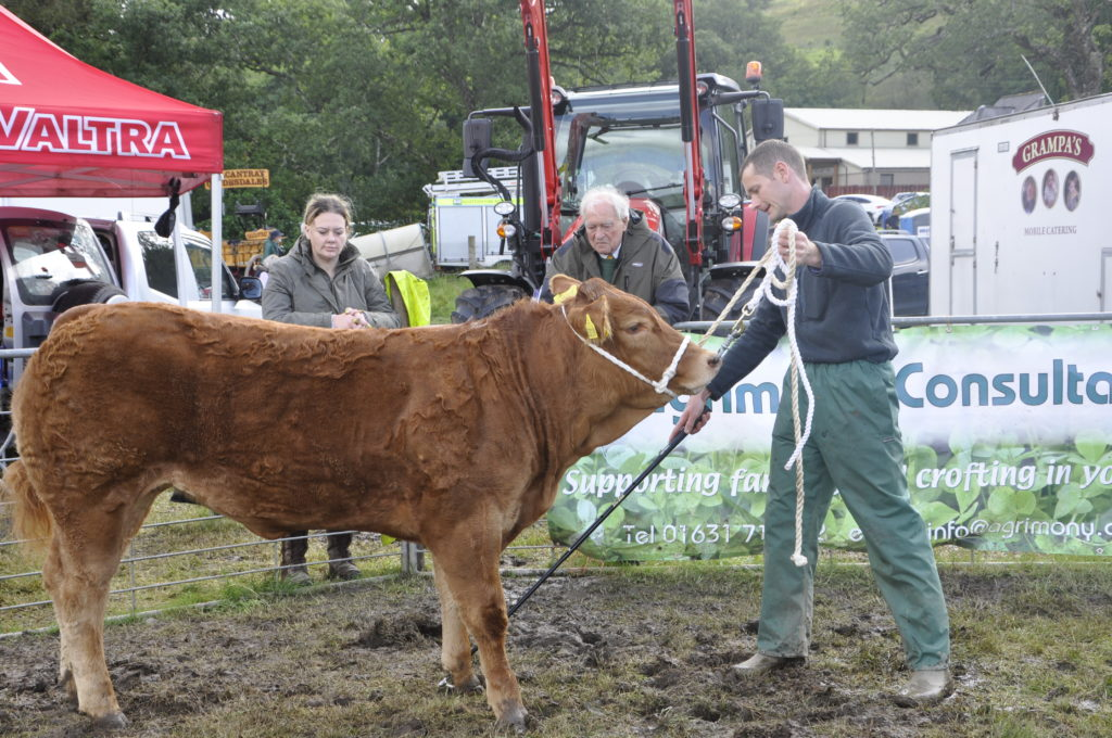 Ewen MacGillivray Jnr from Home Farm, Barcaldine, with his Orkney-born heifer, champion of champions.