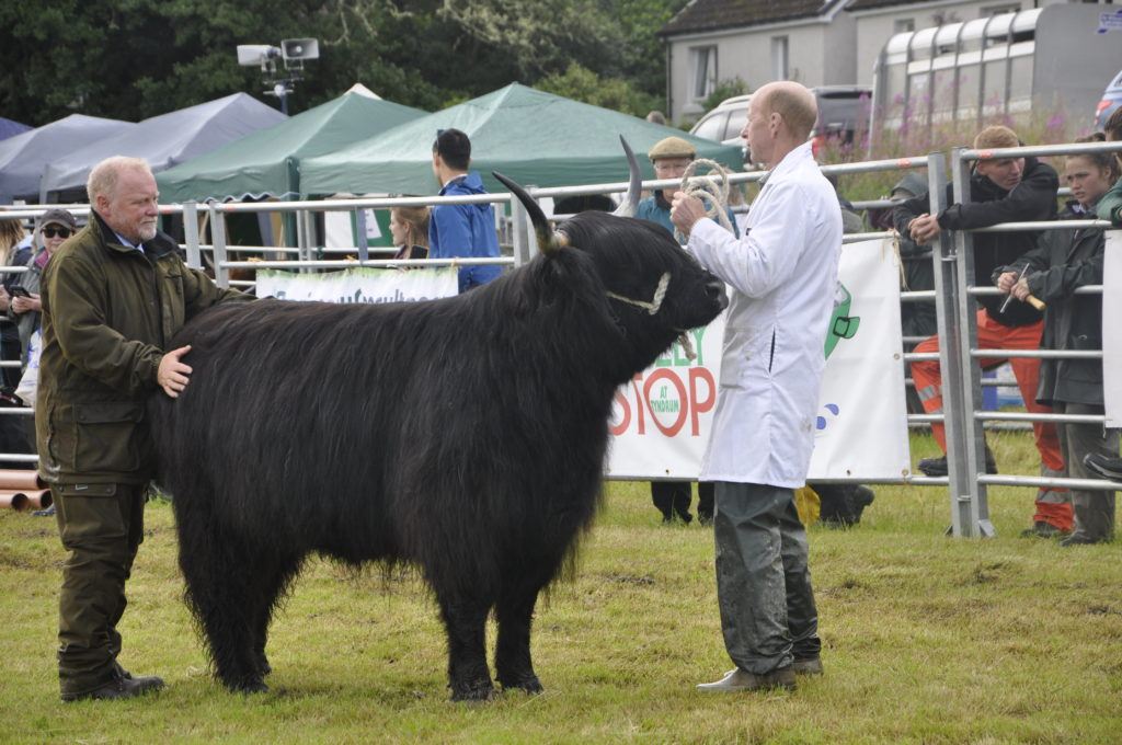 The Highland cattle section proved highly popular, with one of the biggest entries ever.