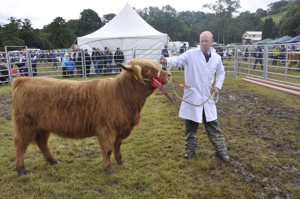 Duilleter Farm stockman Stuart McKay shows Champion Highland, Lillian IV of Glenkinglass,