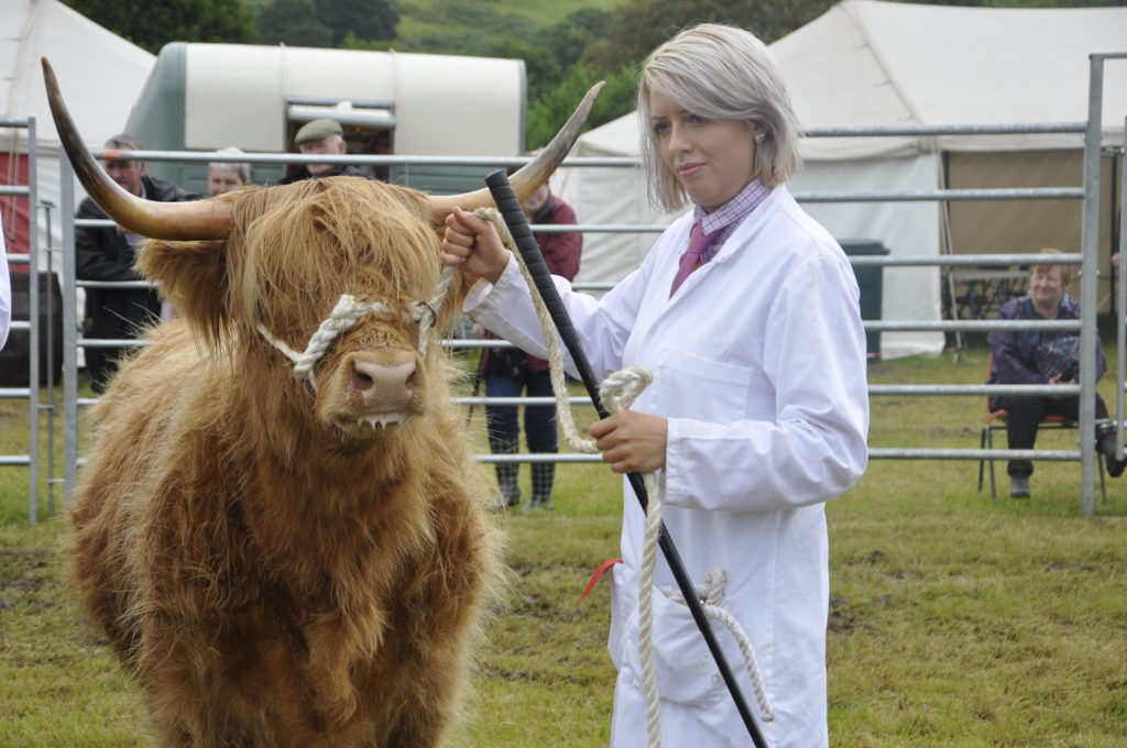 Sarah Noble, showing Fionngael 1st of Culloden, for Tordarroch, best two-year-old Highland.