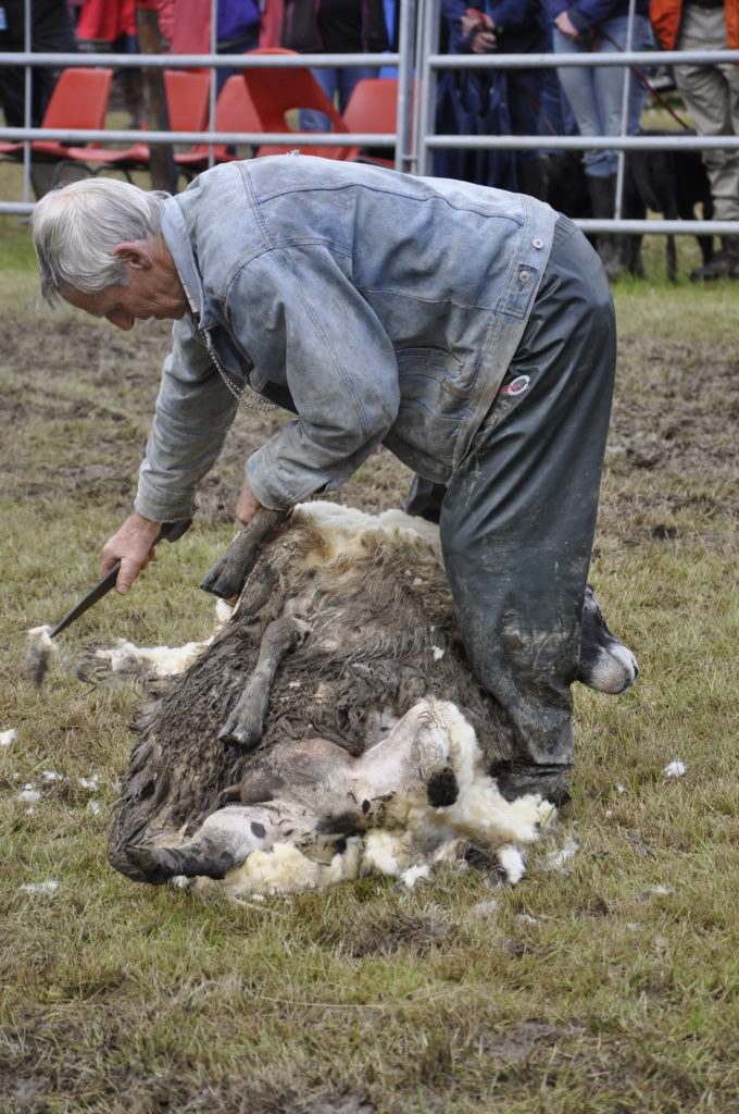 James Weir from Angus proved he was handy with the clippers at this sheep shearing demonstration.