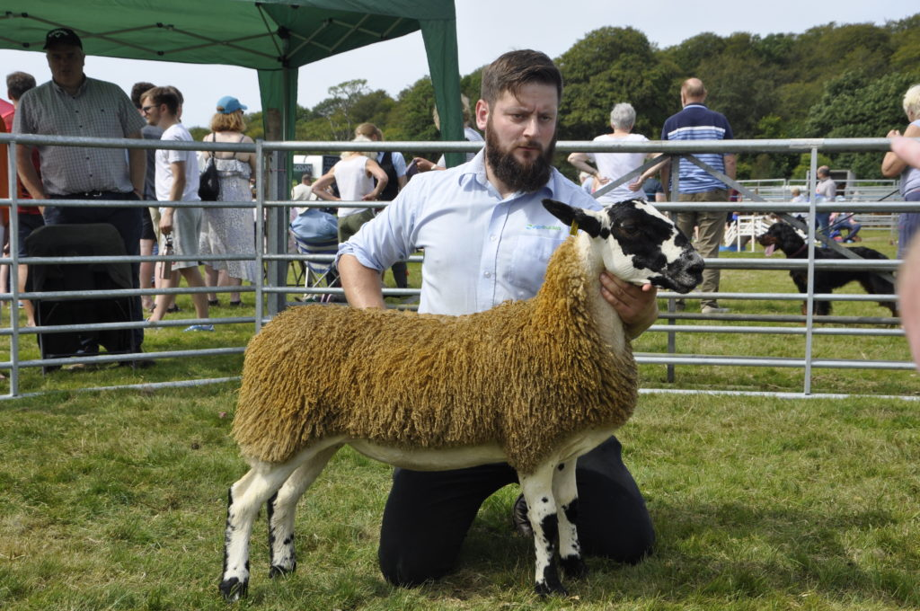 Andrew Campbell from Drimsynie Estate won overall any other breed with his Mule ewe lamb. 15_t32_LornShow03