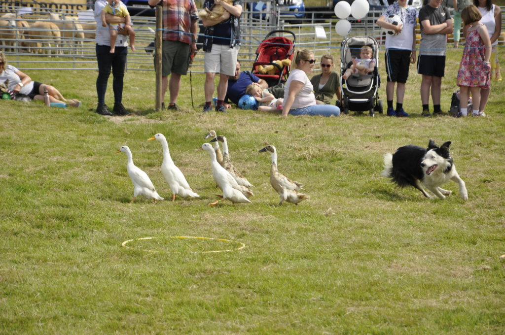 The Drakes of Hazard were a fan favourite at the show. 15_t32_LornShow12