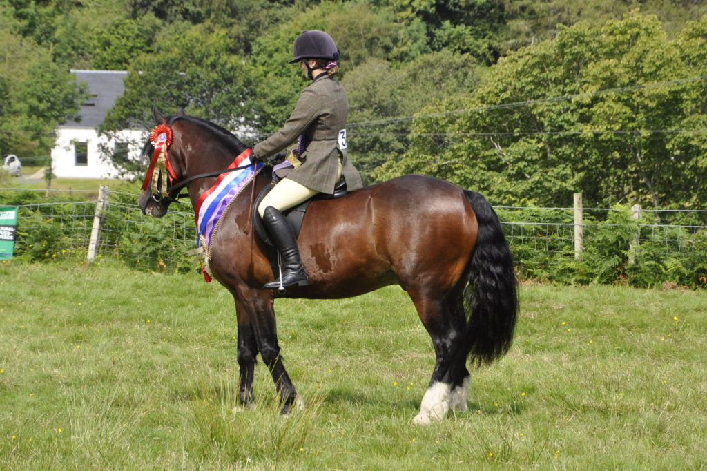Orla MacLennan, 16, from Salen, and Abbercrippen Spartacus won best overall horse at this year's show. 15_t32_SalenShow01
