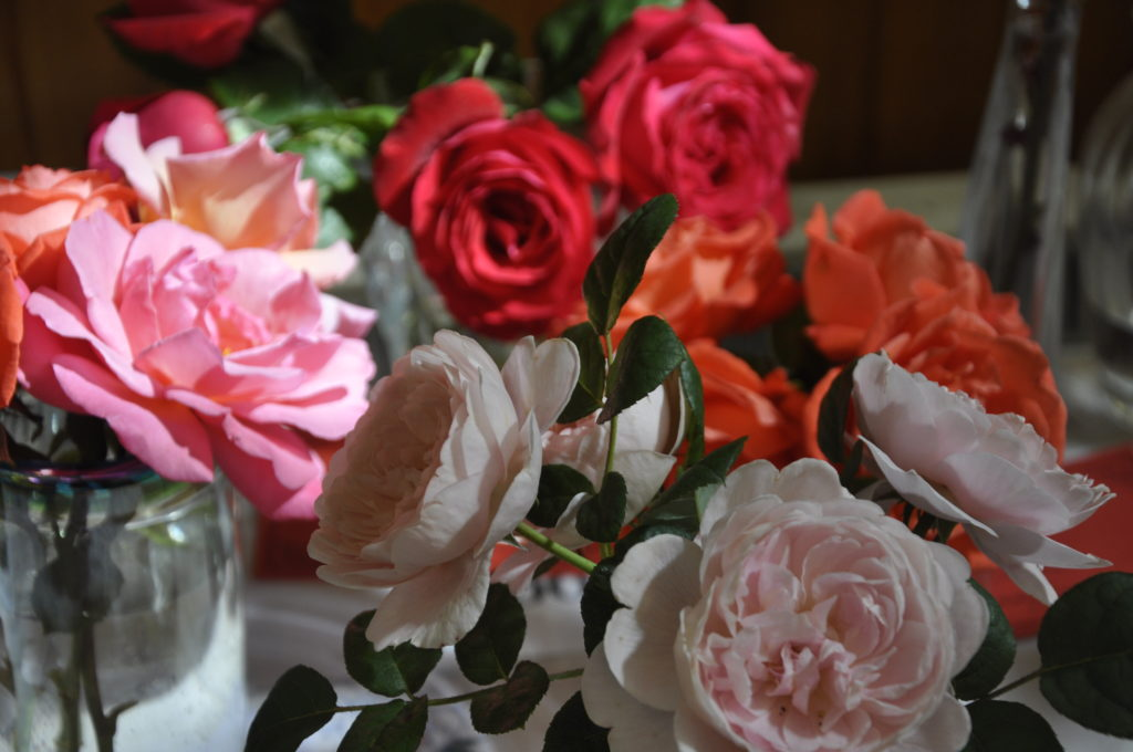 Everything is coming up rosy. Roses at the show were first class.
