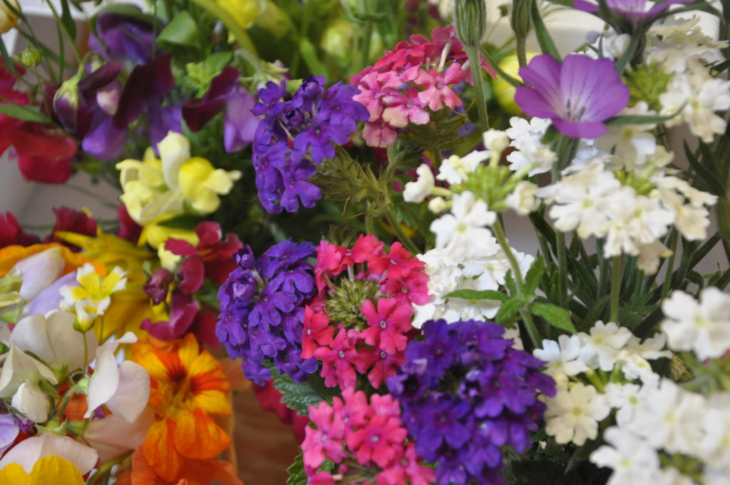Beautiful blooms at the Luing show on Saturday. The scent filled Cullipool Village Hall.