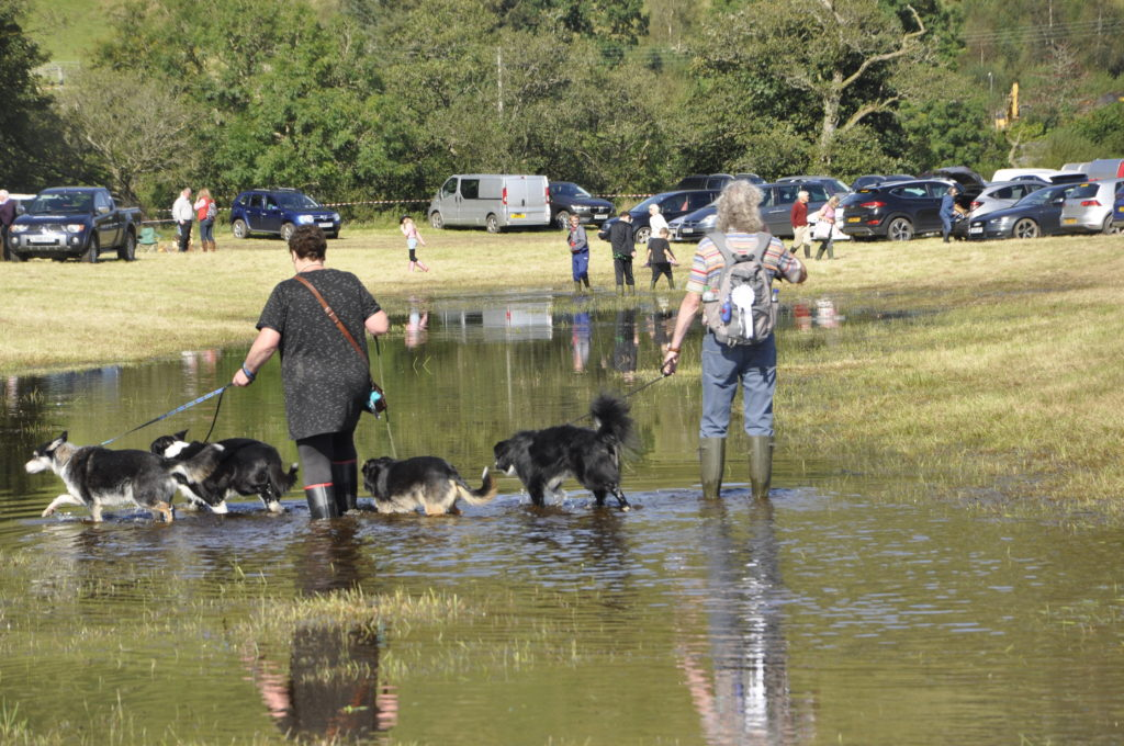 Plenty of places for the dogs to cool off.