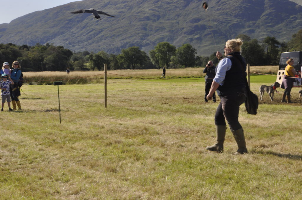 The falconry display proved a great lure.