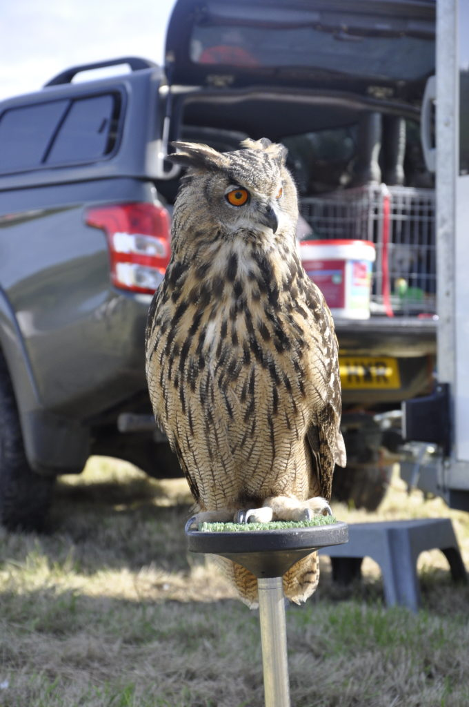 Chip the Eagle Owl kept a keen eye on proceedings.