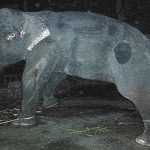 t03-hannah-morris-elephant-1no