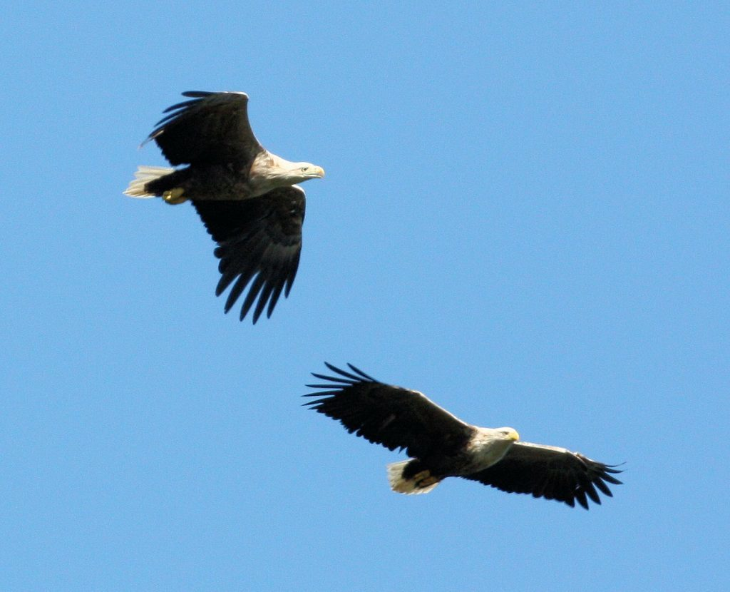 f07-eagle-watch-1no