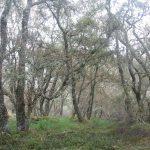 t07-celtic-rainforest-1no