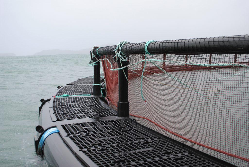 Salmon production value passes £1 billion