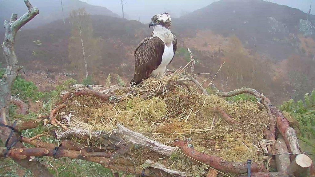 Loch Arkaig osprey cam set for switch-on