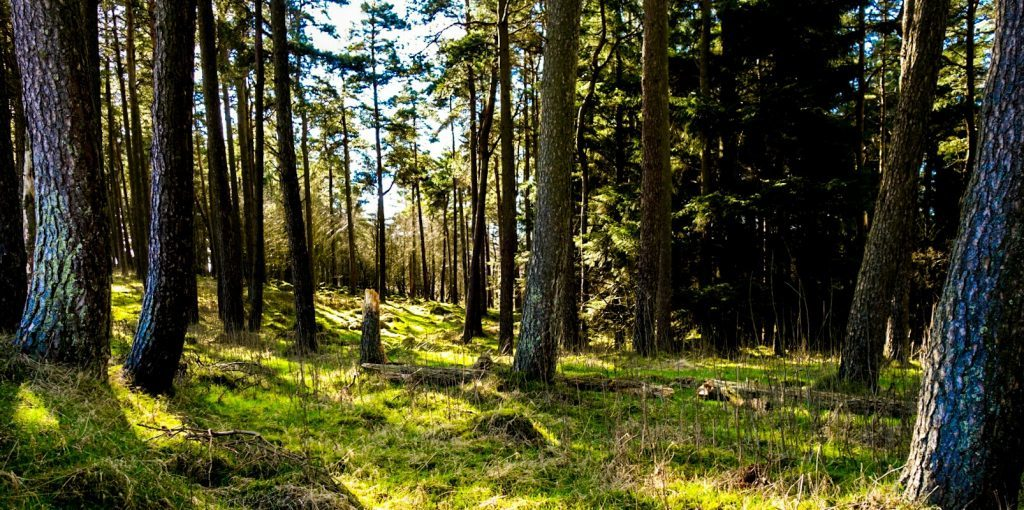 Women foresters urged to promote the sector