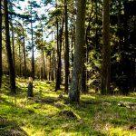 scottish-forestry