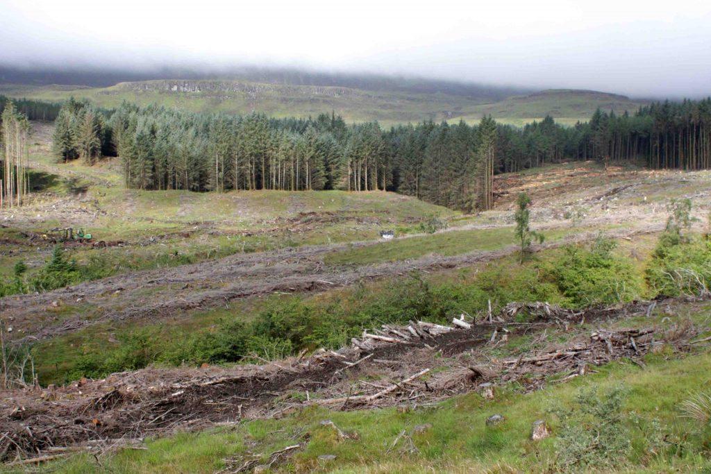 Forestry debate: Alternatives to Gazelle