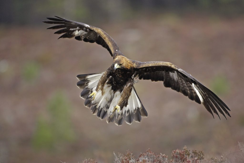 Golden eagle death prompts union warning