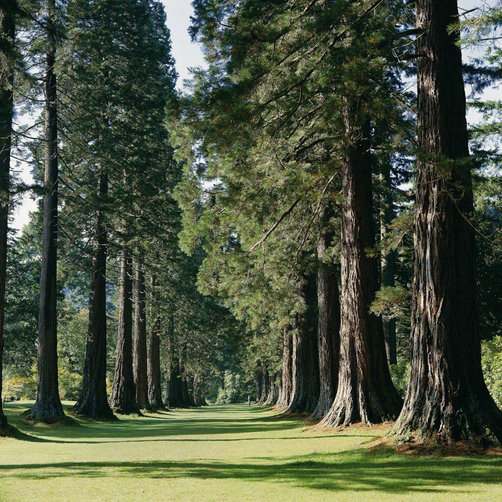 Argyll's botanic garden set to open again