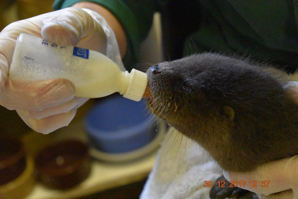 Skye-based Otter group marks 25th anniversary
