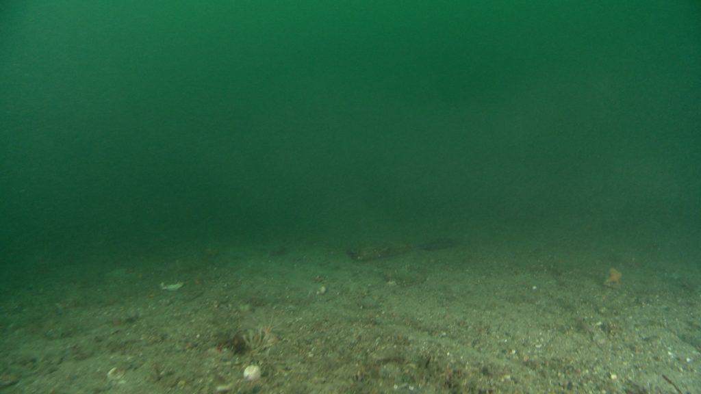 Call for clampdown on illegal scallop dredging