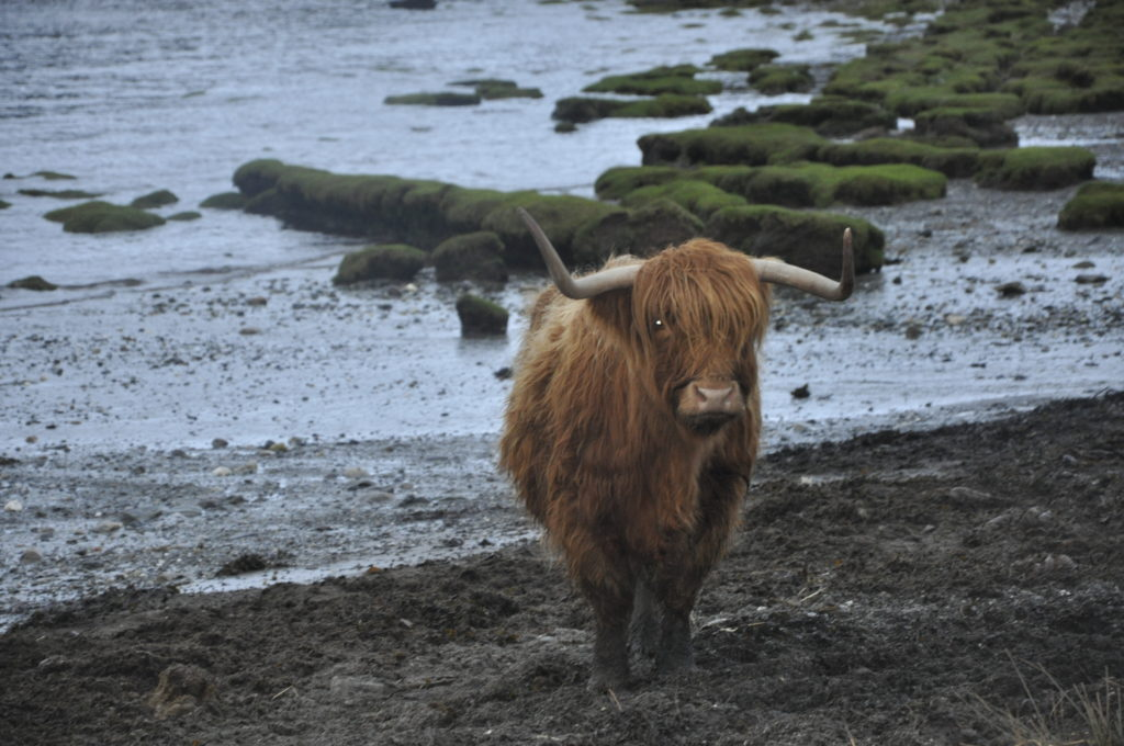 Highlanders keep up strong Oban connection