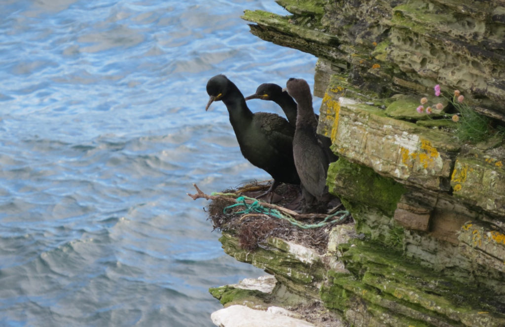 Public asked to help with research into impact of plastics on birds