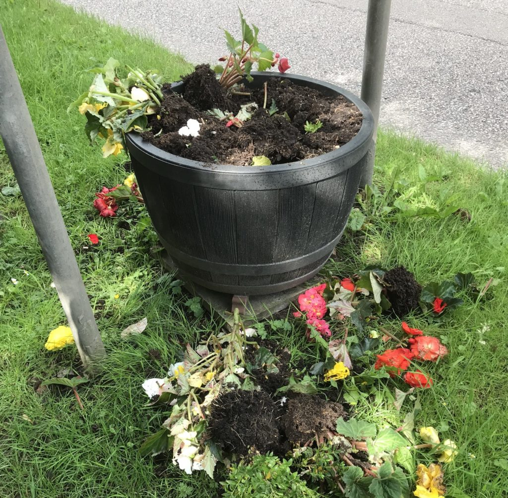 Outrage over Corpach flower tub vandalism