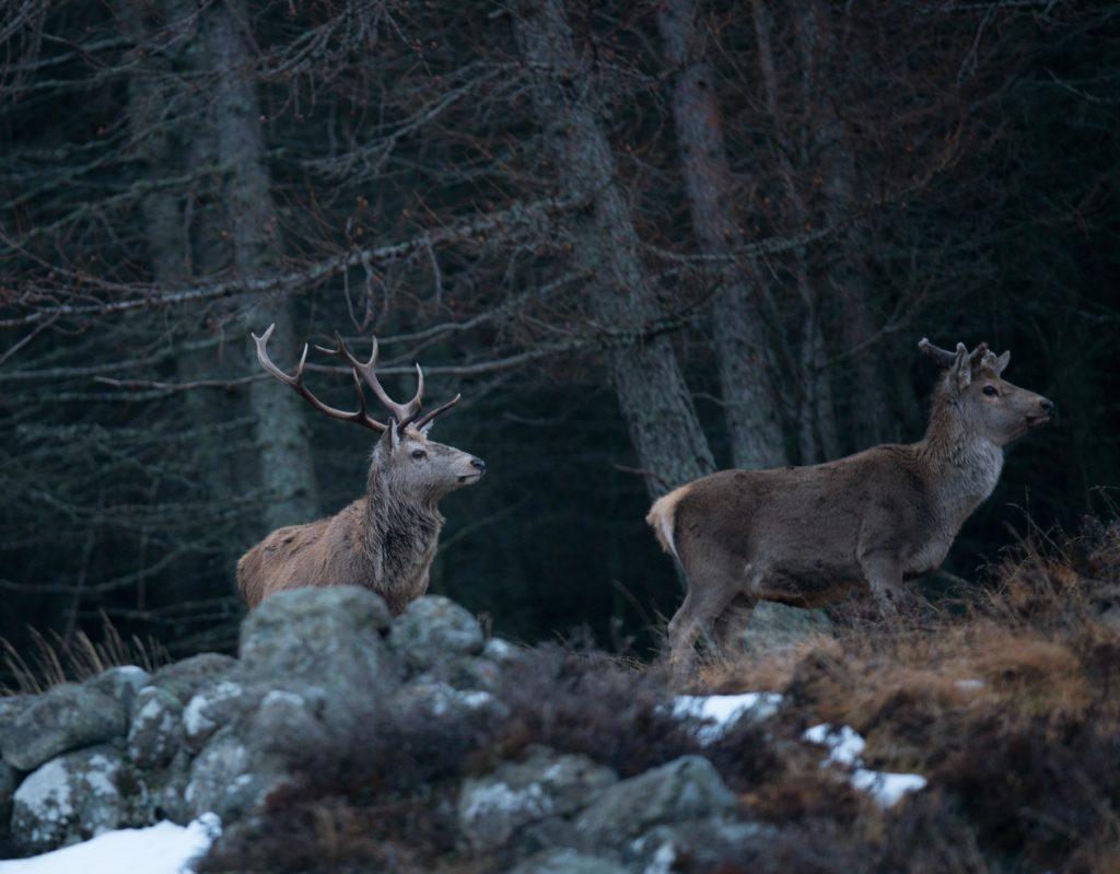 Gamekeepers want talks on deer shooting